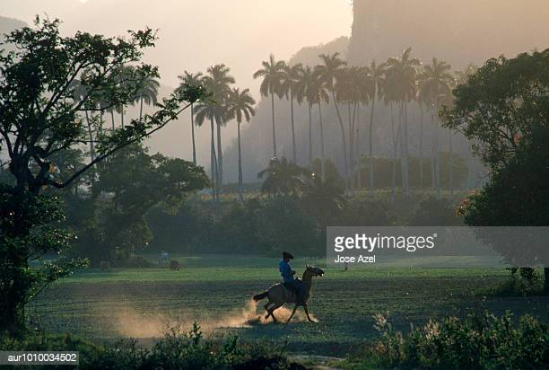 man riding a horse in the vinales valley, cuba - valle de vinales stock-fotos und bilder