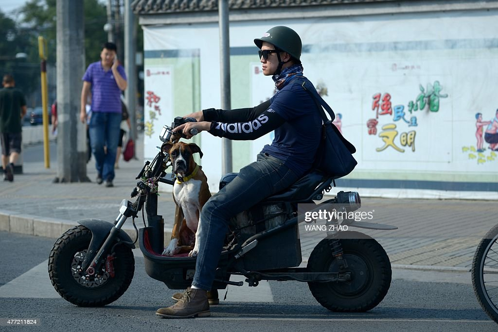A man riding a motorcycle with a dog waits at a crossing on a street in Beijing on June 15, 2015.