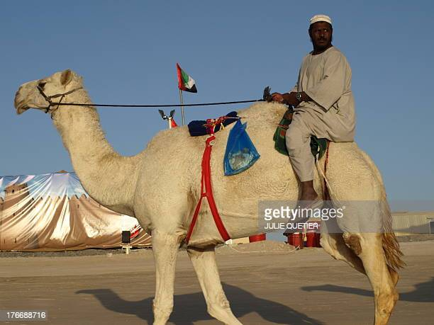 CONTENT] Man riding a white camel in the Al Dhafra camel festival in January in the Empty Quarter desert in Abu Dhabi's emirate United arab Emirates