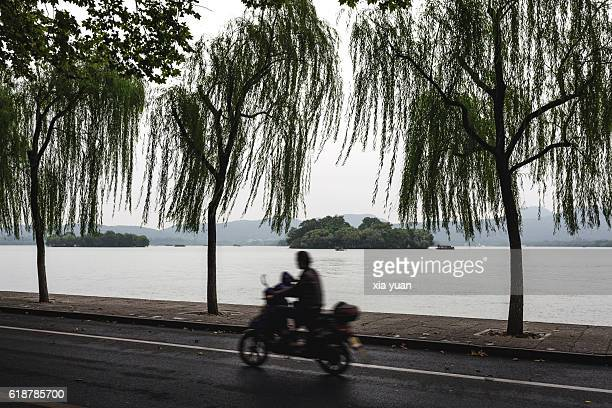 Man riding bike along Bai Causeway on the West Lake,Hangzhou,China