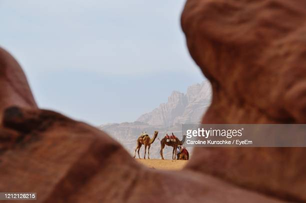 man riding camel on rock against sky - jordanian workforce stock pictures, royalty-free photos & images