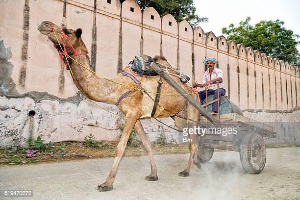 hombre montar en camello llamado cesta alsisar, rajastán de india - ox cart fotografías e imágenes de stock
