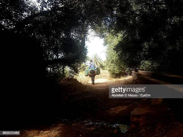 Man Riding On Donkey Over Dirt Road Amidst Trees At Forest