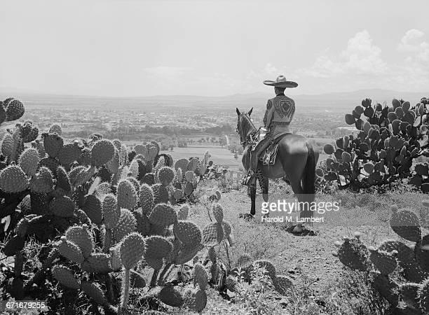 man riding on horse - vertebrato foto e immagini stock