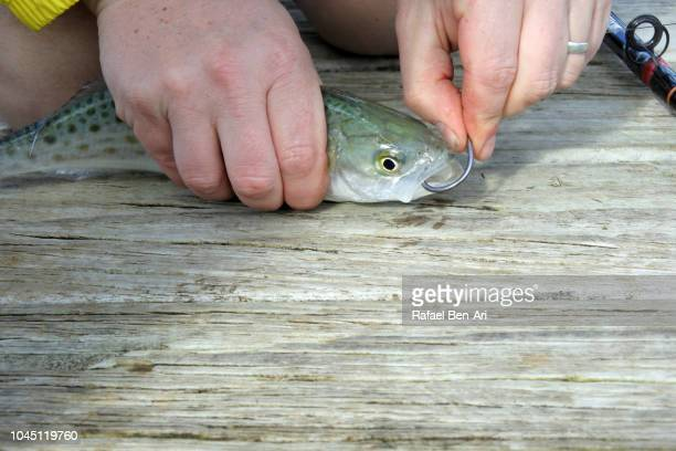 Man Rig a Live Bait on a Fishing Rod