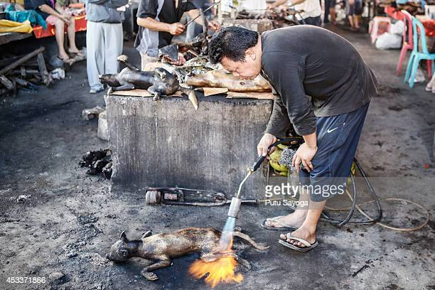 A man roasts dog at Langowan traditional market on August 9 2014 in Langowan North Sulawesi The Langowan traditional market is famous for selling a...