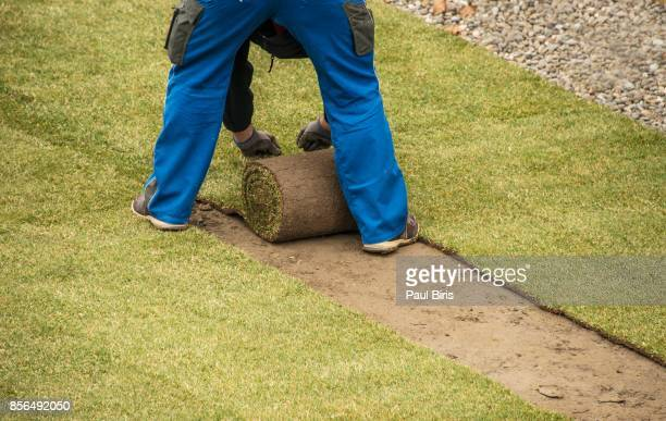 Man rolling out new turf and making new lawn with grass