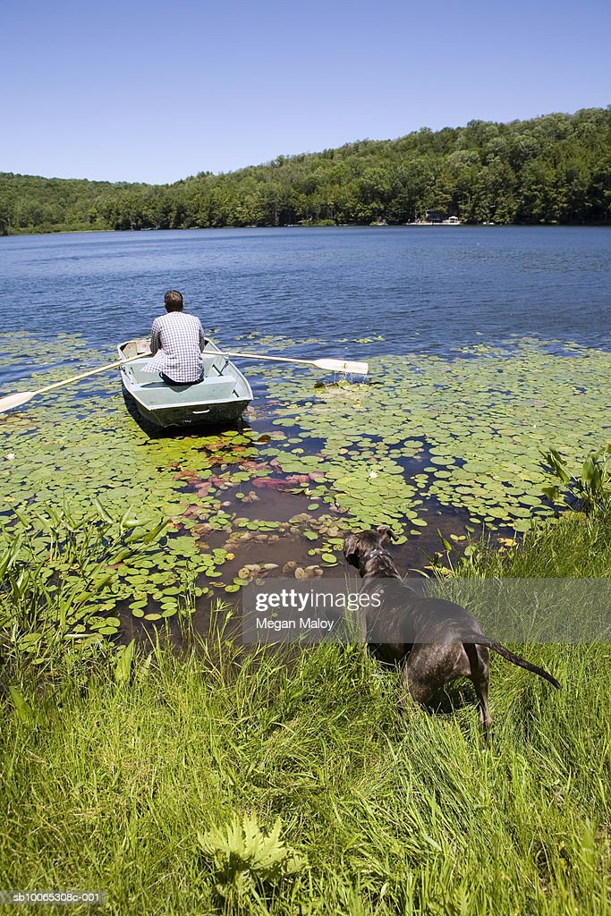 Man rowing boat on lake, rear view : Foto stock