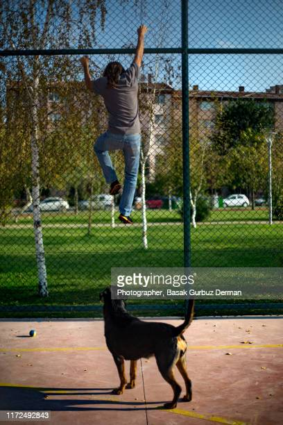 a man running away from a rottweiler dog, climbing up the fence - runaway stock pictures, royalty-free photos & images