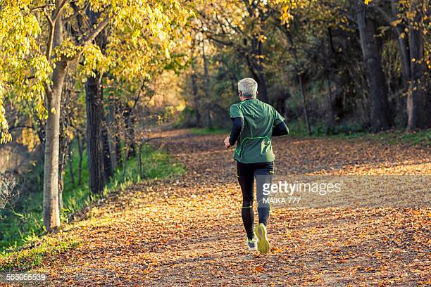 man running in woods, rear view - castellon de la plana stock photos and pictures