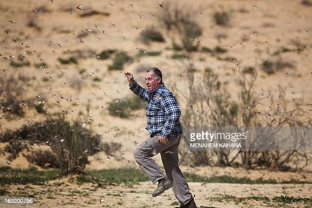 A man runs amidst a swarm of locusts on March 6 2013 in the Israeli village of Kmehin in the Negev Desert near the Egyptian border According the UN...