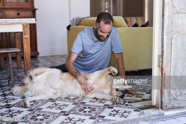 man scratching his golden retriever dog water in the kitchen - mid adult men stock pictures, royalty-free photos & images
