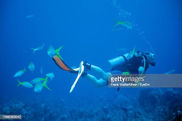 man scuba diving undersea - aqualung diving equipment stock pictures, royalty-free photos & images