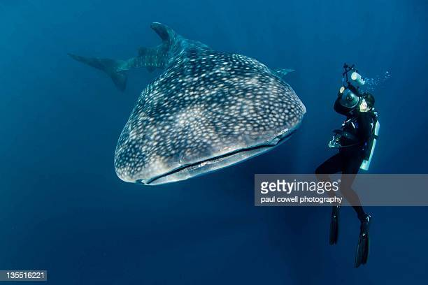 Man Scuba diving underwater and whale shark