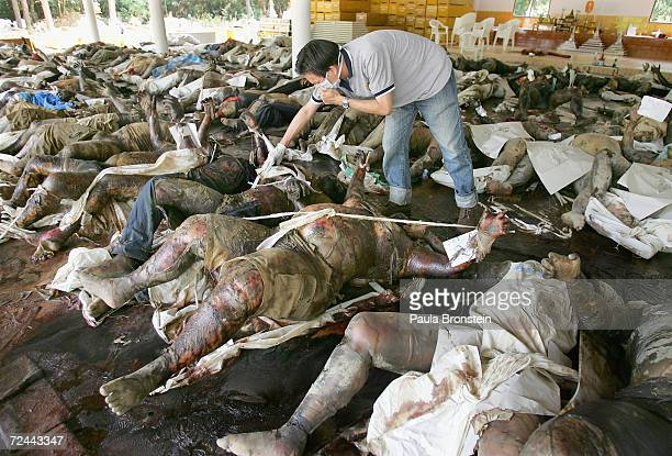 A man searches for his relatives in a temple full of unidentified bodies at the Ban Muang temple which has become a makeshift morgue on December 29...