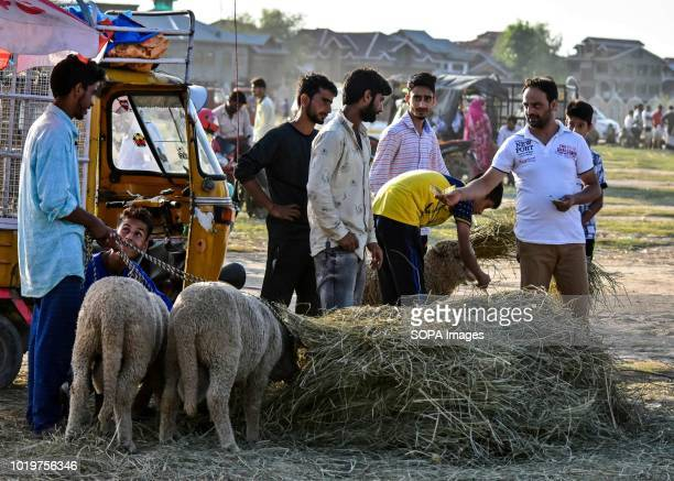 A man seen buying a sacrificial animal at a livestock market ahead of the Muslim festival Eid alAdha Muslims across the world are preparing to...
