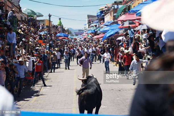 Man seen trying to fight to bulls of 450 kg during the traditional 'Huamantlada' a festivity of Tlaxcala that was held in 1954, consists of releasing...