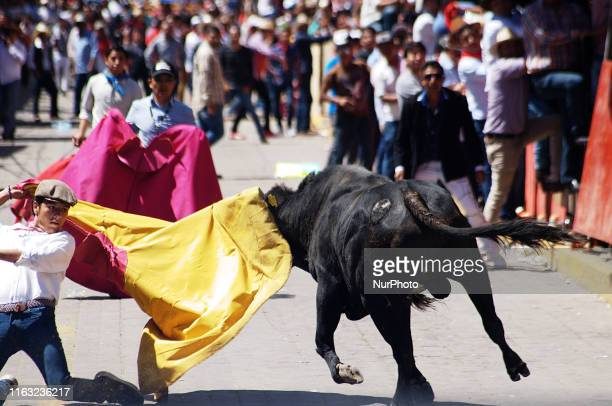 A man seen trying to fight to bulls of 450 kg during the traditional 'Huamantlada' a festivity of Tlaxcala that was held in 1954 consists of...