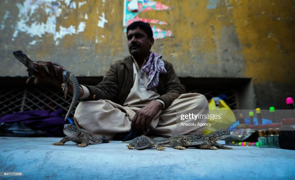 A man sells lizards to people for treatment of muscle and joint pain at Raja market place where Pakistani people prefer shopping due to it's...