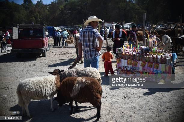 A man sells sheeps in the market in Tlaxiaco Oaxaca State hometown to Mexican actress Yalitza Aparicio on February 16 2019 Aparicio who stars Alberto...