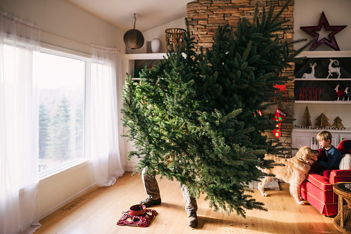 Man setting up a Christmas tree in the living room with son and dog sitting on a couch - gettyimageskorea