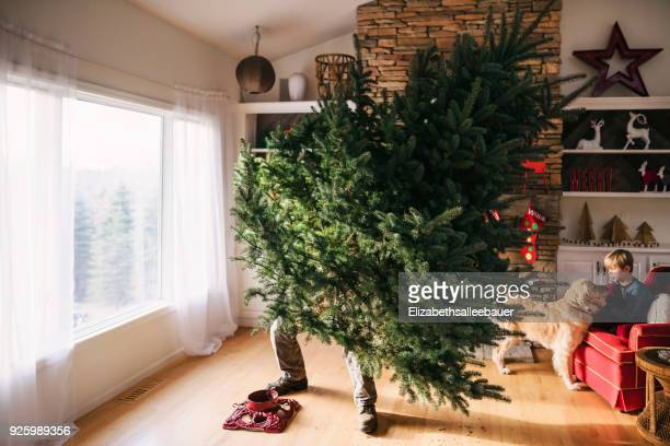 man setting up a christmas tree in the living room with son and dog sitting on a couch - christmas tree stock pictures, royalty-free photos & images