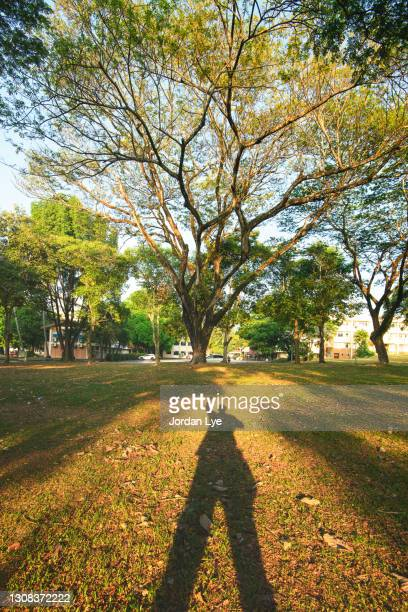 man shadow in the park with tree and sunlight - formal glove stock pictures, royalty-free photos & images