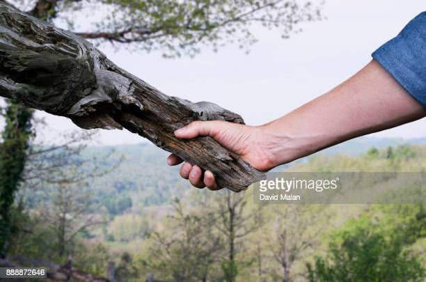 man shaking hands with a tree. - snag tree stock pictures, royalty-free photos & images