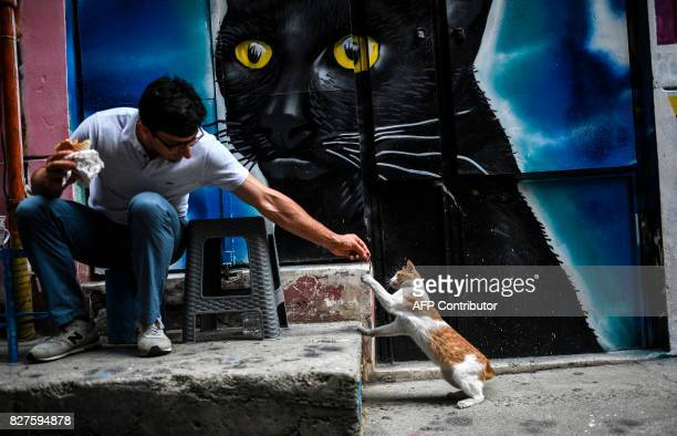 A man shares part of his lunch with a cat in the Galata district of Istanbul on August 8 on International Cat Day / AFP PHOTO / BULENT KILIC
