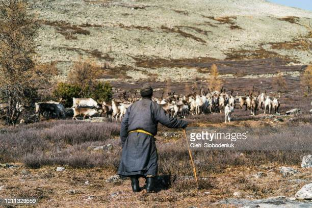 man shepherding reindeers  in mongolia in winter - tundra stock pictures, royalty-free photos & images
