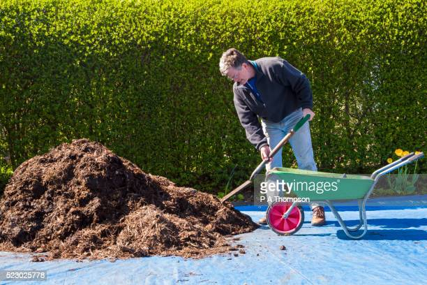 Man shovelling manure into wheelbarrow