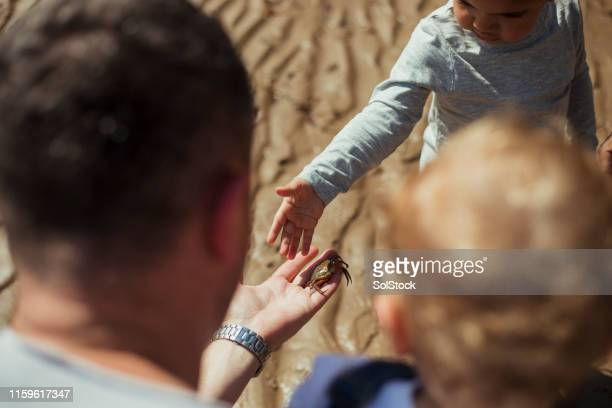 man showing a boy a crab - crab stock pictures, royalty-free photos & images