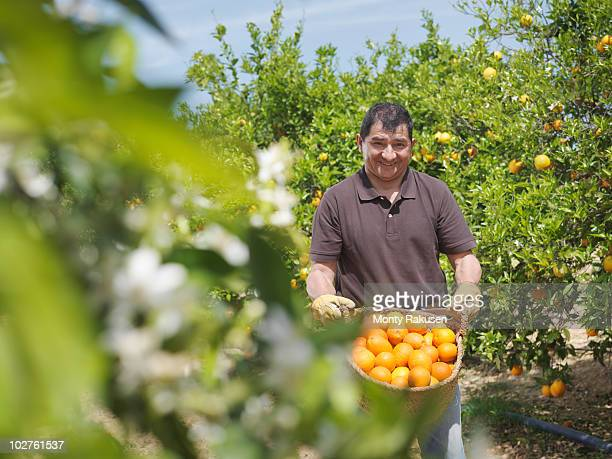 man showing basket full of oranges - orange farm - fotografias e filmes do acervo