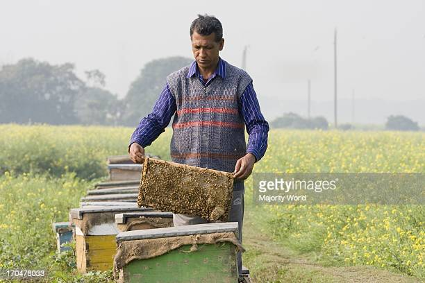 A man showing honey basket at a mobile honey collection plant in a mustard field in Manikganj Bangladesh January 09 2009