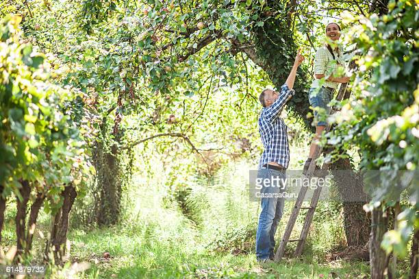 Man Showing to a Woman Which Apple to Pick