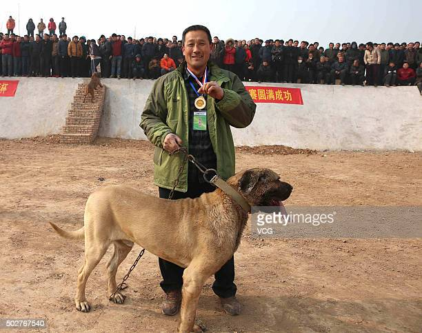 A man shows a medal won by his dog during a dog competition for celebrating new year in Jishan County on December 28 2015 in Yuncheng Shanxi Province...