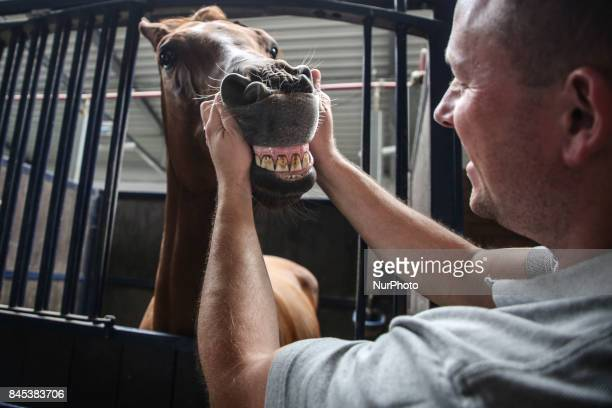 A man shows horse's teeth in a stable during the 2nd Cracow Arabian Horse Show and Auction in the quotSzaryquot Equestrian Club in Michalowice near...