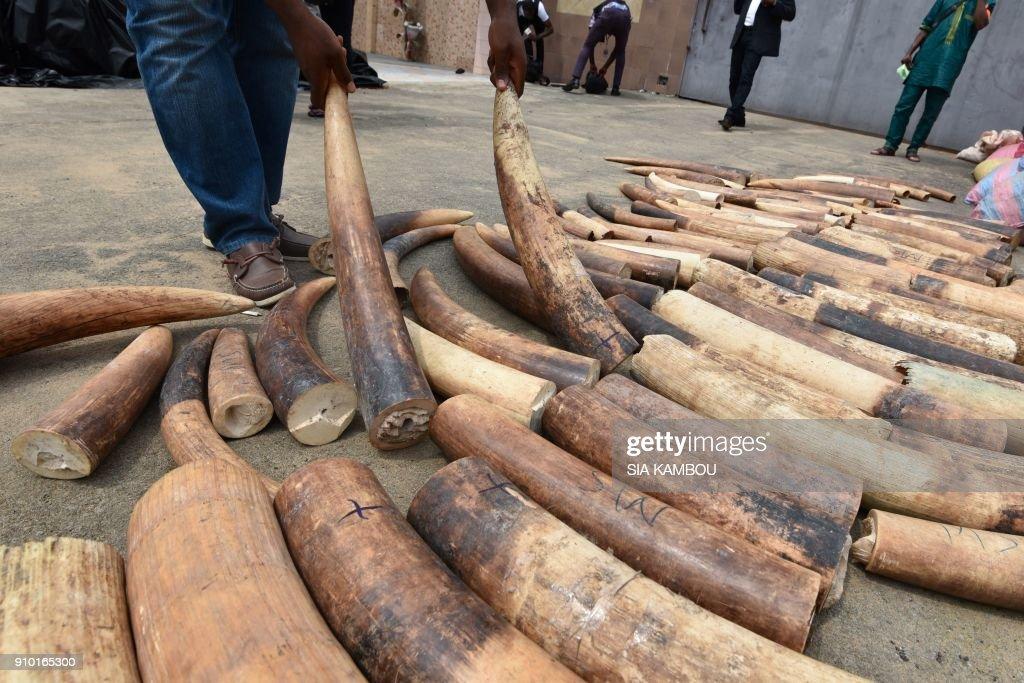 ICOAST-CONSERVATION-TRAFFICKING-ANIMALS-WILDLIFE-IVORY-CRIME-SEI : News Photo