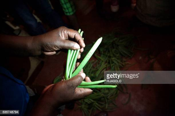 A man shows vanilla as about 260 kg of green vanilla have been seized by gendarmerie and representative of Government and stored at the Gendarmerie...