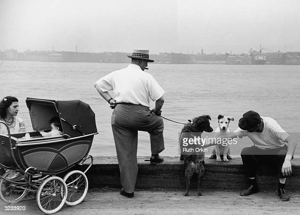A man sits next to a dog and pets another dog held on a leash by a man who is smoking a cigar A woman with a baby in a stroller sits to their left...