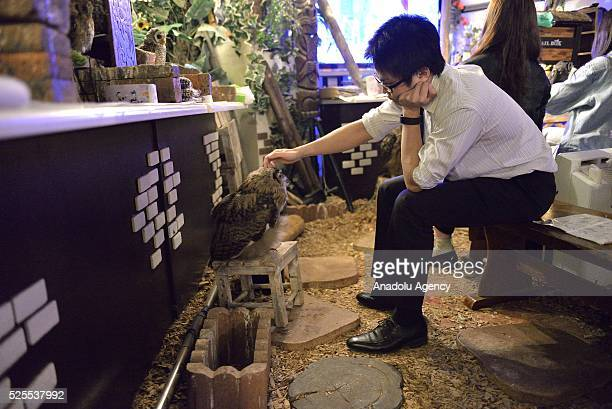 A man sits on a bench as he strokes an eagleowl in an Owl Cafe the Forest of Owl in Akihabara district of Tokyo Japan on April 27 2016 The OwlCafe...