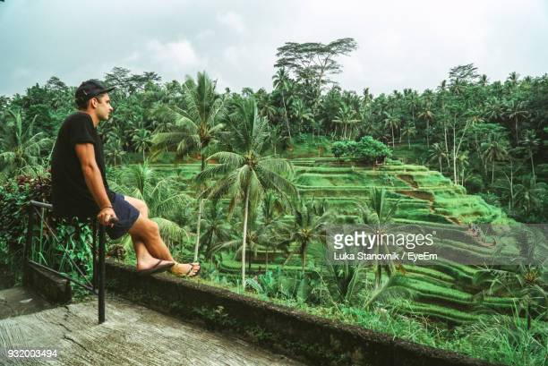man sitting against trees - bali stock pictures, royalty-free photos & images
