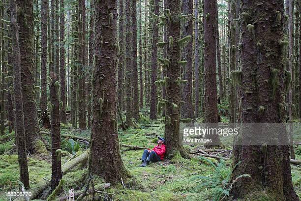 Uomo seduto tra moss-Tsuga e Abete coperto di alberi lussureggianti