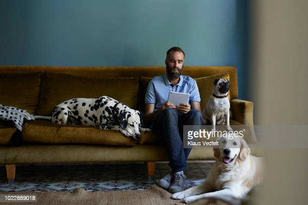 man sitting in sofa looking at tablet, surrounded by his 3 dogs - one man only stock pictures, royalty-free photos & images
