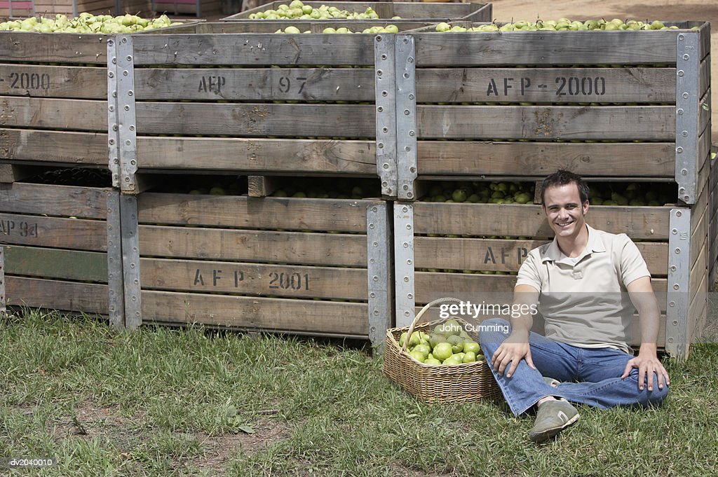 Man Sitting in the Grass, Crates of Pears Behind Him : Stock Photo