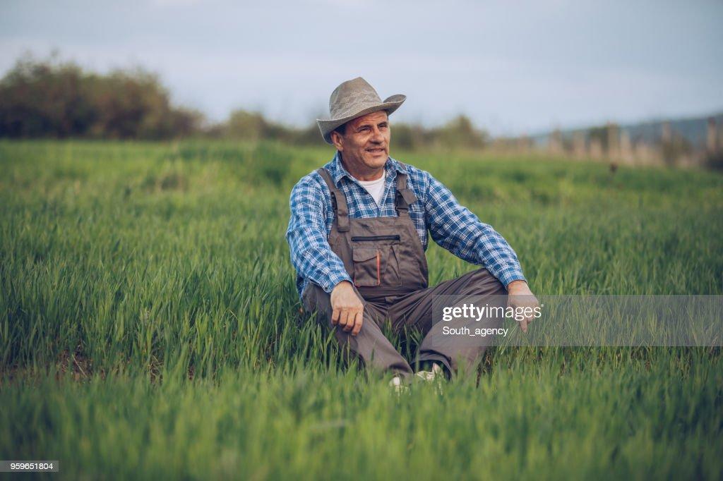Mann sitzt im Weizenfeld : Stock-Foto