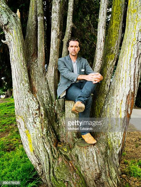 man sitting in tree - limb body part stock pictures, royalty-free photos & images