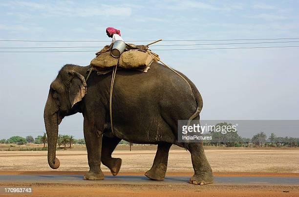 Man sitting on an elephant, Chhattisgarh, India.
