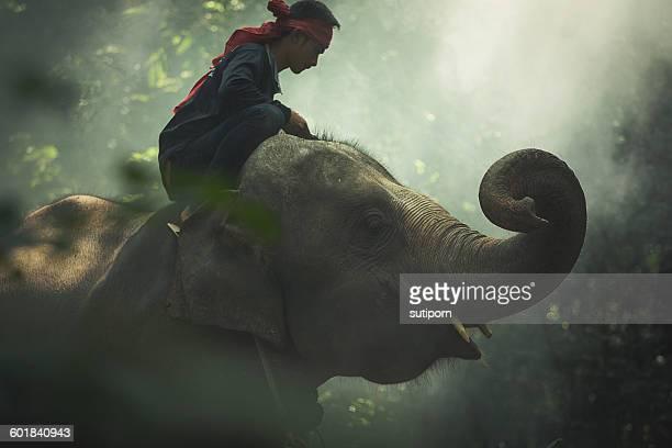 Man sitting on elephant, Surin, Thailand