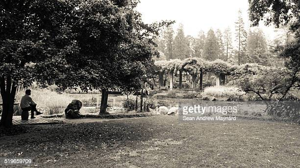 man sitting under tree by lotus pond - wuhan city stock photos and pictures